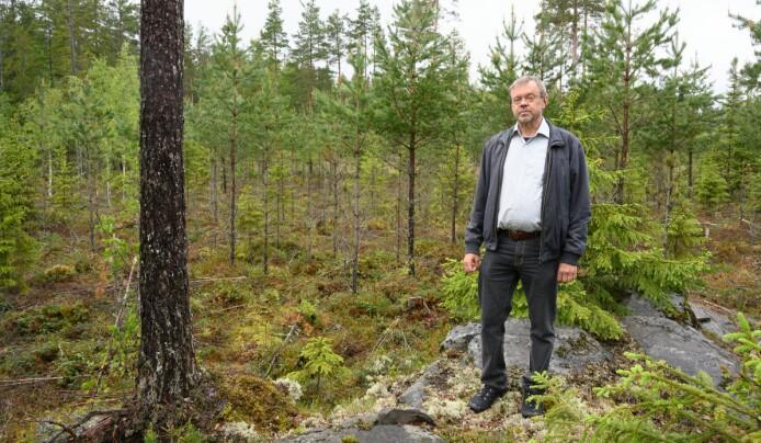 Import av tømmer og trevarer bryter norsk lov
