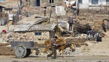 Sør-Korea er en av verdens rikeste og mest velfungerende stater, mens Nord-Korea er et lutfattig diktatur. Hvorfor er det slik? På bildet ser vi nordkoreanske arbeidere sør for hovedstaden Pyongyang. (Foto: Prevost Vincent, Hemis.fr, NTB scanpix)