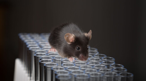 Er helsenyheten basert på en musestudie uten at det kommer tydelig frem? En forsker bruker Twitter til å rydde opp.