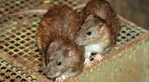 New Zealand vil utrydde flere dyrearter