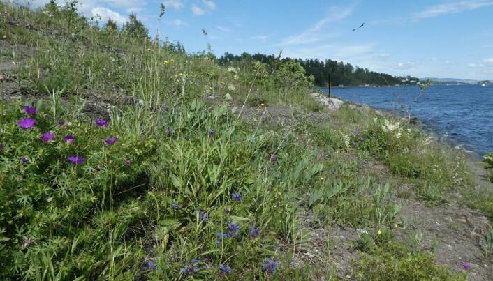 Åpen, grunnlendt kalkmark er en svært artsrik naturtype. Hvor mange arter ser du på bildet? Hint: et tosifret antall! Foto: Siri Lie Olsen.