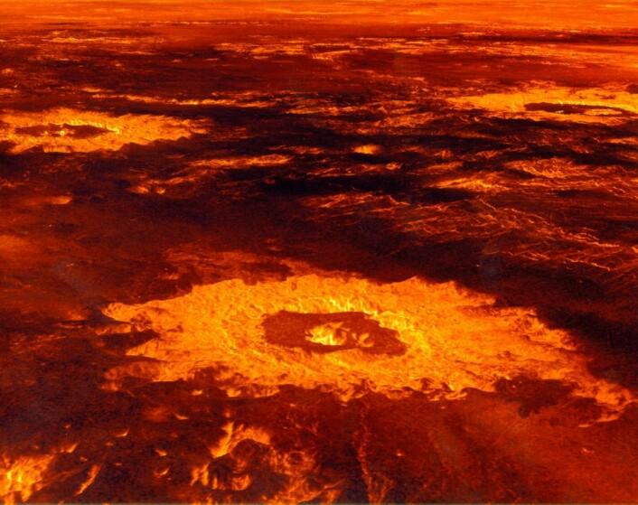 Overflaten av Venus med kratere sett ved hjelp av radar og kunstige farger. (Foto: NASA)