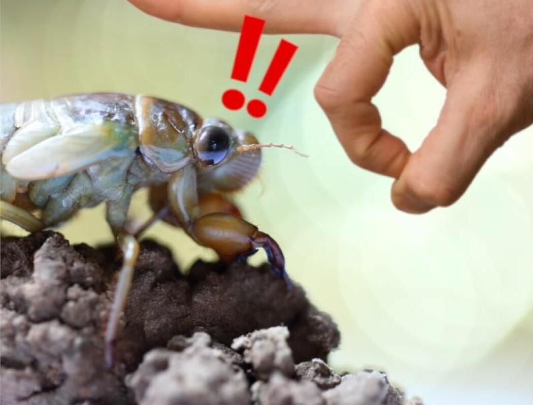 En leser vil gjerne vite hvorfor insekter kan klare å sveve flere hundre ganger sin egen kroppslengde uten å komme til skade. (Illustrasjon: AgriTech / Shutterstock / NTB scanpix / videnskab.dk)