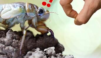 Spør en forsker: Hvordan kan insekter overleve et knips?