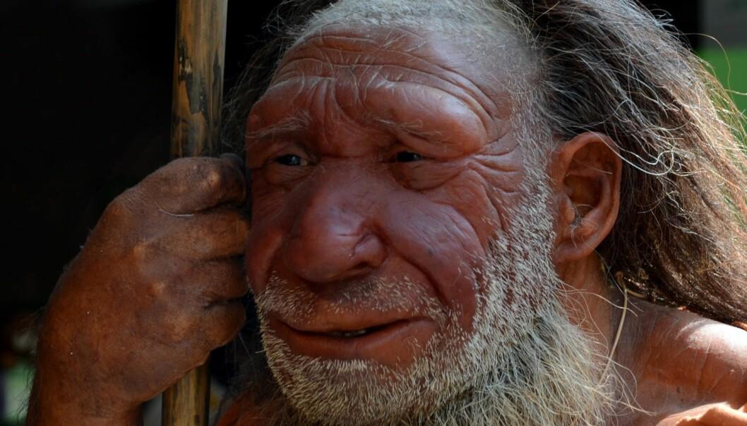 Neandertalernes Y-kromosom - finnes det blant oss i dag?