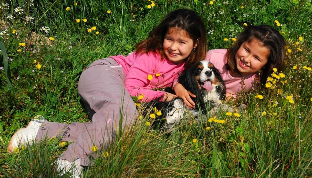 Svenske forskere fant at eneggede tvillinger gjorde samme hundevalg enn toeggede gjorde. (Illustrasjonsfoto: Colourbox)