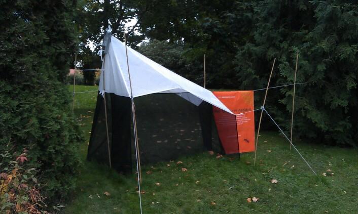 Mailaiseteltet er konstruert for å fange insekter. Det sto oppe i 6 uker. (Foto: Gunhild Marthinsen, NHM)