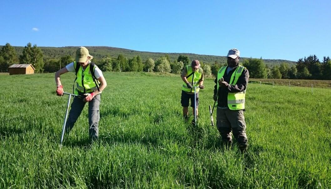 Man kan aldri vite hvor man treffer på jordborkamerater. Her er en gjeng opptatt med å undersøke jorda i Lesja kommune våren 2016.  (Foto: Siri Svendgård-Stokke)