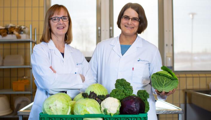 Nofimaforskerne Grethe Iren Borge og Gesine Schmidt undersøker innholdsstoffer i ulike typer kål i prosjektet KålSmak. (Foto/CC: Joe Urrutia/Nofima)