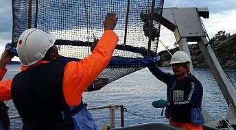 Forskarar bura torsken inne for å studere effektane av miljøgifter