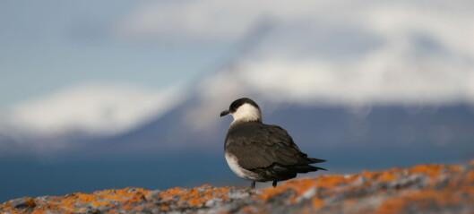 Fugletrekket- fra myter til anvendt kunnskap