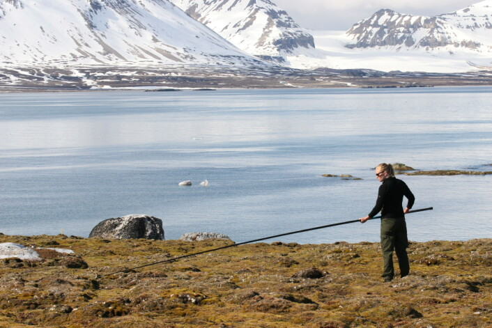 Lang fiskestang med løkke er en effektiv og skånsom metode for å fange sjøfugl. Her er student Elise Skottene i ferd med å fange en ærfugl. (Foto: Børge Moe)