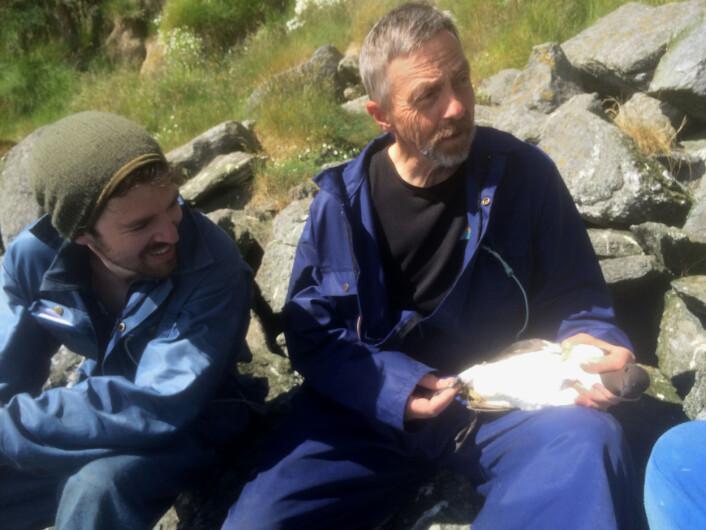 Odd Helge Olsen og Tycho Anker-Nilssen med den britisk-merkede lomvien. (Foto: (Zoe M. Burr))