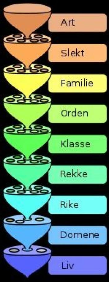 Figur 1: Klassifiseringssystem for livet på jorda (WikipediaCommons L. Pengo CC BY-SA 3.0)