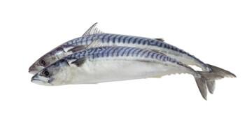 Makrellen er neppe en likspiser. (Foto: Shutterstock, NTB scanpix)