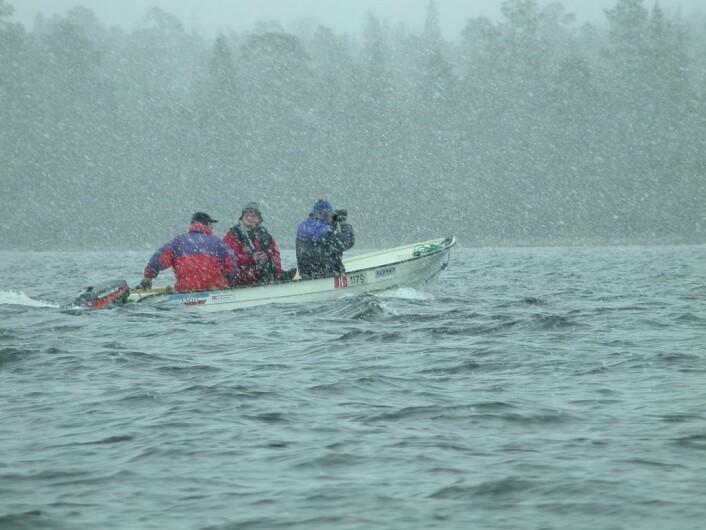 Det kan være ganske surt på elva, også i slutten av mai. Dette bildet er tatt under vannfugltellingene i mai 2002. (Foto: Morten Günther)