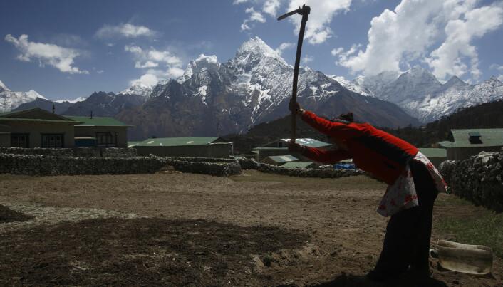 Arbeid i en åker nedenfor fjellet Thamserku i Nepal, på rundt 3700 meters høyde. Det er uvisst hva slags vannforsyning de har her. (Bilde: Reuters/Navesh Chitrakar/NTB Scanpix)