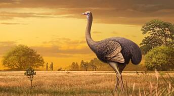 Denne gigantfuglen var tre ganger så stor som en struts og levde i Europa