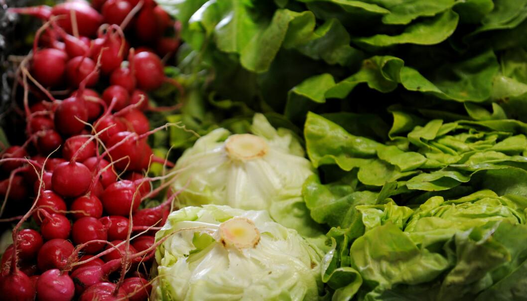 I vårt frie samfunn er det ikke mulig å tvinge forbrukere til å kjøpe økologisk mat så lenge de har tillit til vanlig mat og så lenge økologisk mat er vesentlig dyrere, skriver kronikkforfatterne. (Foto: Frank May / NTB scanpix)