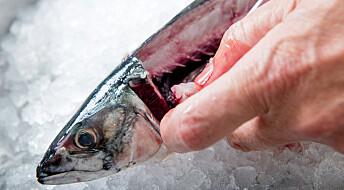 Skal lage lukt- og smakfritt proteinpulver av makrell-rester