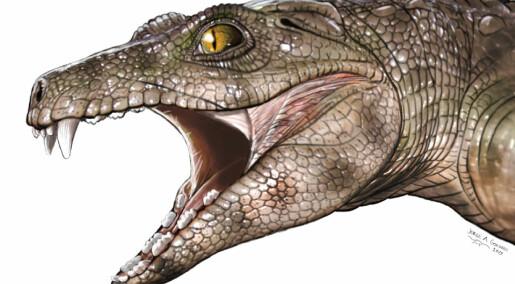 Møt veggis-krokodillene