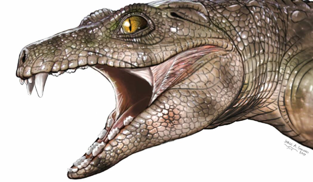 Chimaerasuchus, en av fortidas planteetende krokodiller, kan ha sett omtrent slik ut. (Illustrasjon: Jorge Gonzalez)