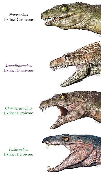 Tennene viser at de utdødde krokodillelignende dyra hadde forskjellig kosthold. (Illustrasjon: Jorge Gonzalez)