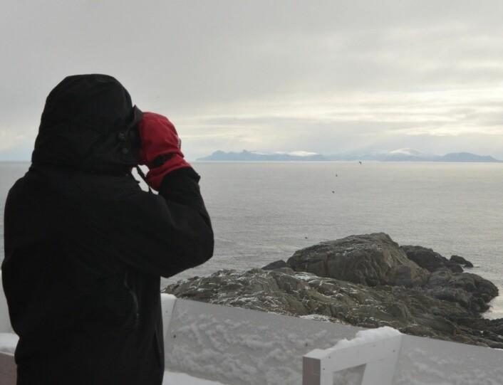 Telling av voksne teist på vannet, fra toppen av fyrtårnet på Anda grytidlig en iskald morgen i mai. (Foto: Magdalene Langset)