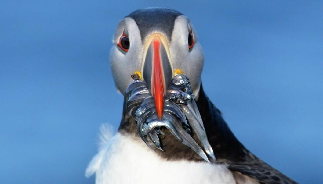 Den artigste, søteste og sinteste fuglen på øya!