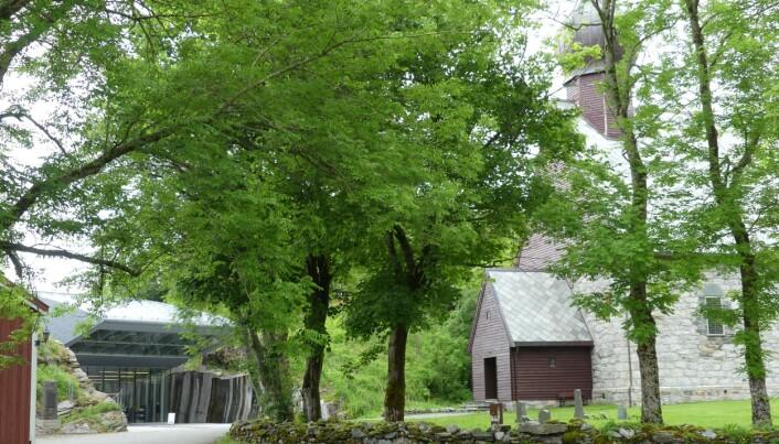 900 år norsk historie – prestegården (den rødmalte veggen til venstre), museumsbygget og kirke på Alstahaug. Foto: Ane K. Engvik