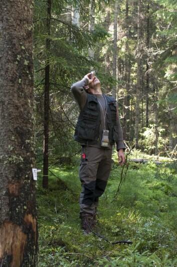 Det er 10,9 milliarder trær i Norge, men om alle småplantene også inkluderes, så øker tallet til over 80 milliarder, det blir 15 000 trær per innbygger. (Foto: Lars Sandved Dalen, NIBIO)