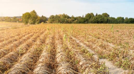 Forskere advarer om mer tørke i Europa i fremtiden
