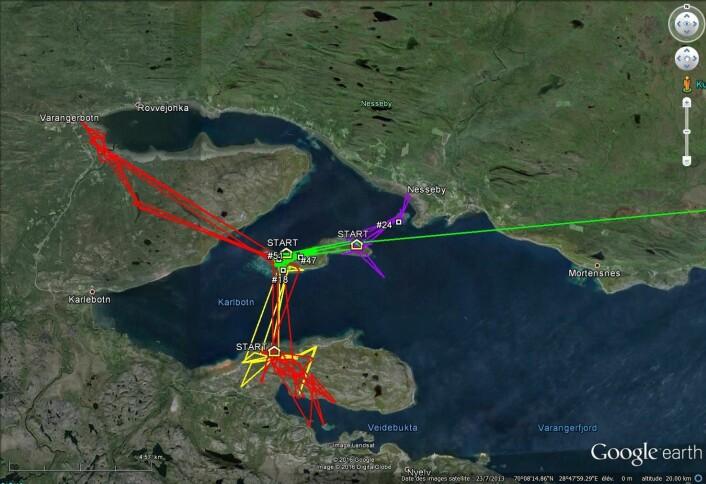 Gåsa med logger 47 var en periode i mai innom Reinøya, men ser ikke ut til å ha hekket i år. I juni trakk den tilbake til merkeområdet, der det også er tre andre gjess med logger. Variasjonene i bevegelsesmønstre viser litt av hvor forskjellige gjessene kan oppføre seg, og hvordan de kan utnytte terrenget rundt hekkeplassene på Skjåholmen.