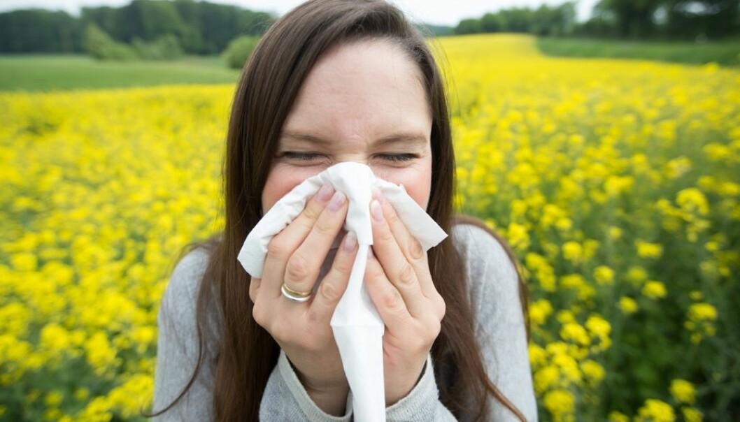 Det har skjedd store framskritt i pollenvaksinering de siste årene. Men norske fastleger henger ikke helt med, mener NAAF. (Foto: Friso Gentsch, DPA/NTB Scanpix)