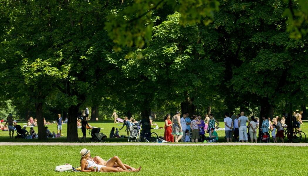 Nordmenn liker å ligge langflate i byparkene, her representert ved Vigelandsparken. Men hvor mye flått er det i byene? En belgisk studie gir en anelse. (Foto: Vegard Wivestad Grøtt / NTB scanpix)