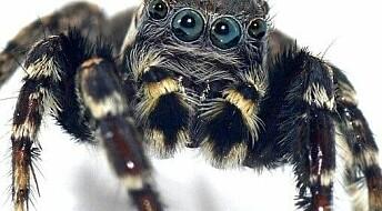 Her er edderkoppen som er oppkalt etter moteikonet Karl Lagerfeld