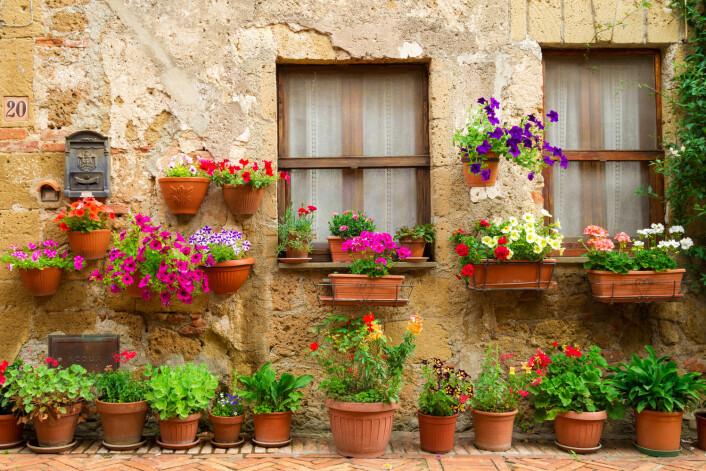 Mange sverger til krukker, enten du er glad i blomster, urter eller grønnsaker. Pass bare på å ha god jord. (Foto: Shaiith, Shutterstock, NTB scanpix)
