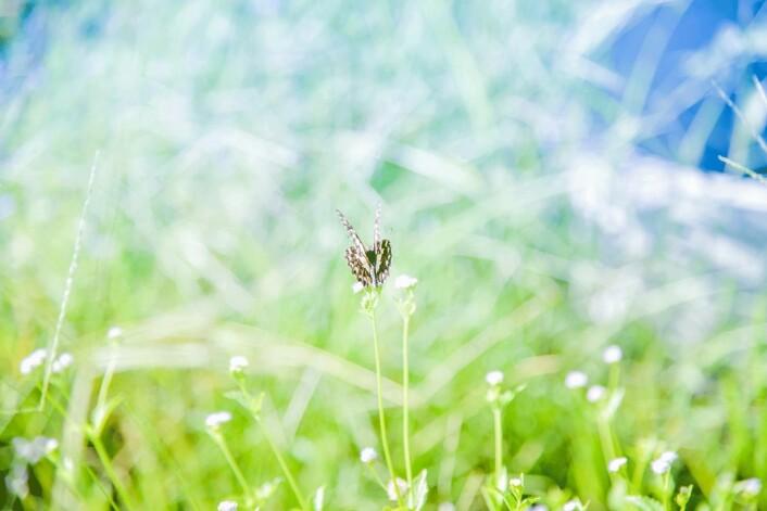 Fordelen med en rotehage, i tillegg til at insektene elsker den, er at det er mye mindre jobb enn en strigla hage. (Foto: Shutterstock)