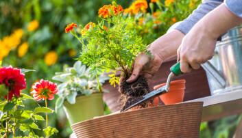 Sommer er hagetid. Men hva slags hage skal du velge? (Foto: Alexander Raths, Shutterstock, NTB scanpix)