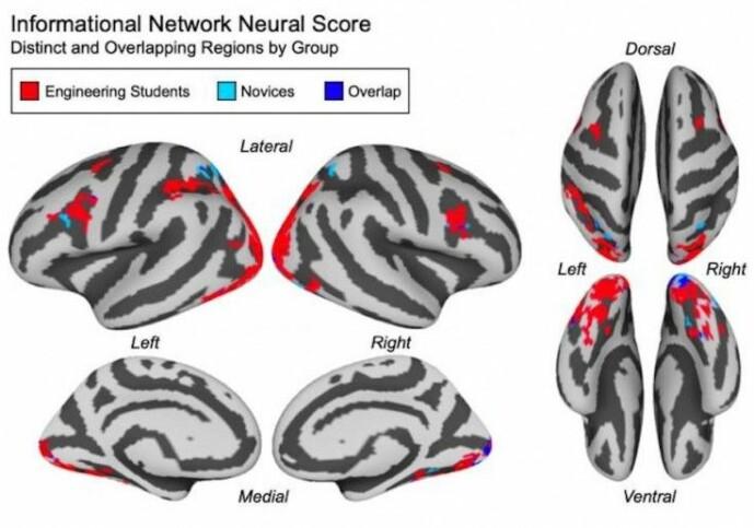 Illustrasjon av deltakernes hjerneaktivitet i fMRI-skanneren. Ingeniørstudentene brukte hjerneområder i rødt, mens de andres områder vises i lyseblått. De overlappende områdene er i mørkeblått. (Illustrasjon: Joshua S. Cetron)
