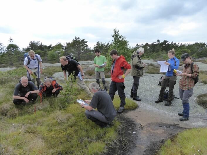 Dyp konsentrasjon når alle kartleggerne skal bestemme naturtypen i punktet som er markert med en rød pinne. Foto: HAU
