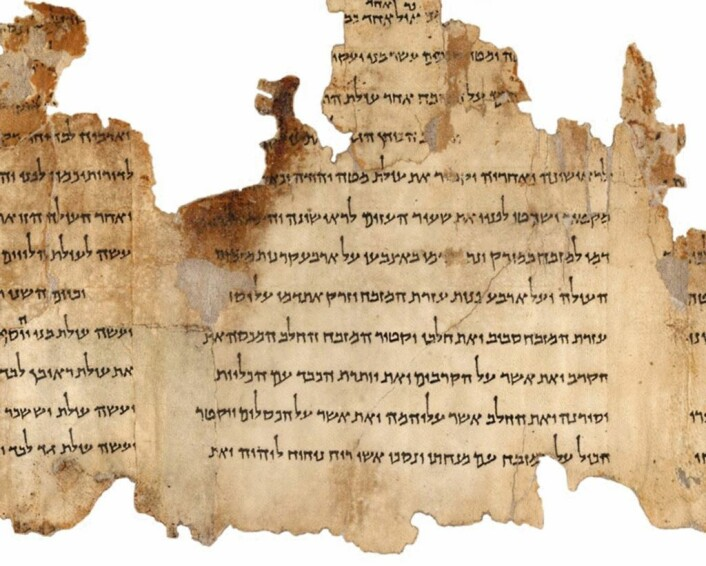 En del av Tempelrullen (Foto: The Israel Museum's 'Dead Sea Scrolls Digital Project)
