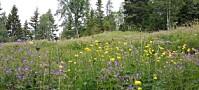 Forskere på jakt etter ville blomsterengfrø