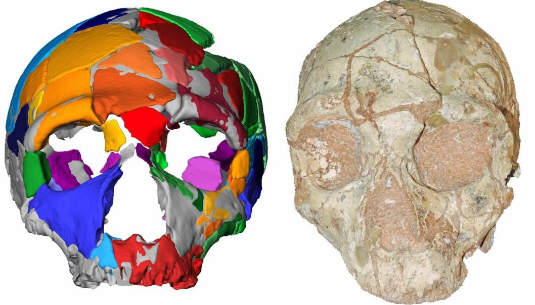 Dette er den andre skallen, omtalt som Apidima 2. Den har neandertalsk opprinnelse. (Bilde: Katerina Harvati, Eberhard Karls University of Tübingen.
