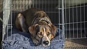 Farlig smitte kan bli med hund og katt hjem fra ferie