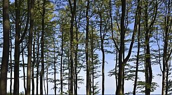 Importert plantesykdom angriper norske trær