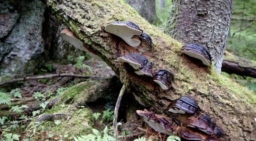 Skogen blir eldre og har mer død ved