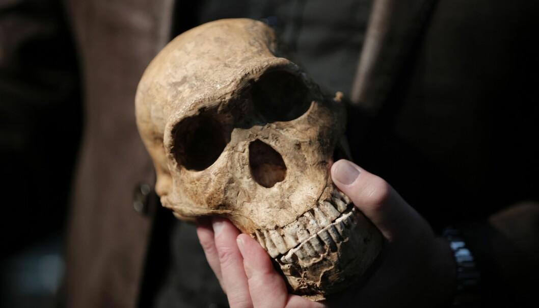 Særlig Homo naledi gir oss grunn til å tenke, skriver Erik Tunstad. (Foto: Gulshan khan, AFP, NTB scanpix)
