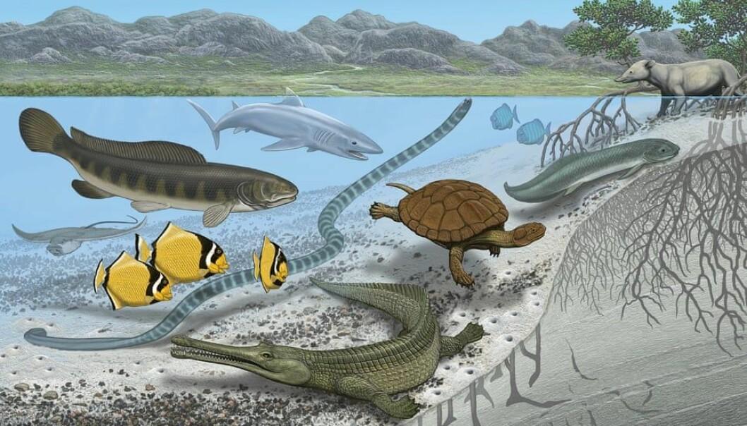 Mange ressurser og få rovdyr kan ha vært årsaken til det forskerne kaller «gigantisme» blant dyrene. (Foto: American Museum of Natural History)