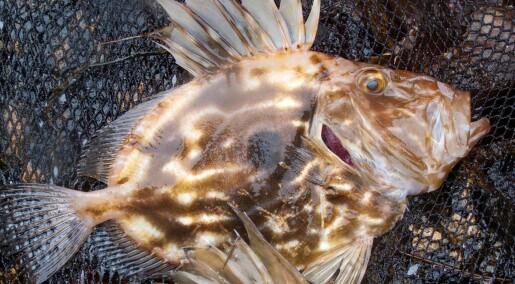 Her er dei mest vanlege uvanlege fiskeslaga i norske farvatn
